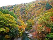 【速報=花木の宿のラッキー7DAYSプランご案内中】南会津は秋本番!尾瀬観光もファイナルシーズン