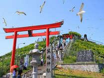国指定天然記念物「ウミネコ」の繁殖地として全国的に知られている蕪島(かぶじま)神社。
