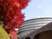 燃えるような紅葉をホテルでご覧いただけます。紅葉の見頃は例年11月20日過ぎ~12月1週目頃です。
