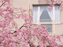 【中庭(春)】