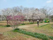 春の自然を満喫!直営農場ふるさと村で2つのアウトドア体験&焼き肉ランチプラン