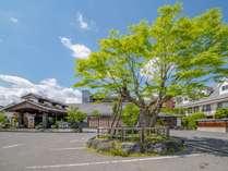 駐車場では、槐の木がお出迎え♪