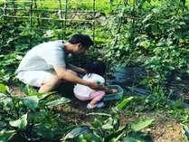 〈夏期限定〉夏野菜の収穫体験プラン