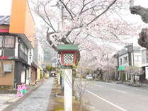 当館玄関前の、駅前通りの風景。桜の花咲く並木道。