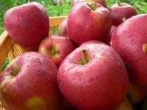【りんご狩り体験】もぐたての新鮮なリンゴの味は…感動する美味しさです♪