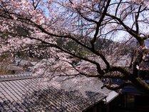 @【春の中庭】満開の桜を館内でお愉しみいただけます!お花見気分でお寛ぎください。