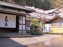 @【春の大原の里】当宿の中庭には、樹齢300年といわれる見事な山桜の大木がございます。