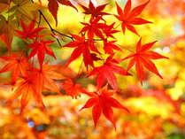 【秋限定★紅葉】甲州いろは坂~夕日に染まる紅葉と秋の味覚を楽しむ [特典]