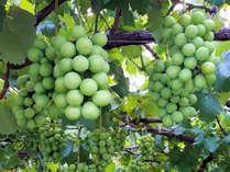 【やまなし★ぶどう】期間限定特典付き◆葡萄は今が旬♪香り豊かな《自然会席》と天然温泉-じゃらん限定-
