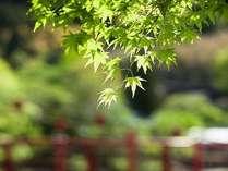爽やかな初夏の旅なら、ぜひ京都へ