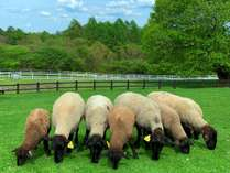 山梨県立まきば公園は羊の放牧など、自然が存分に楽しめます。