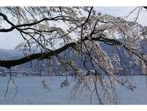 桜と水明荘