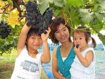 【ぶどう狩り】1泊2食付★秋の味覚!提携農園で味わうプリップリのブドウ食べ放題プラン