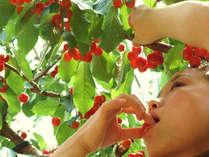 真っ赤なサクランボが農園で食べ放題・送迎も可♪バイキング宿泊プラン