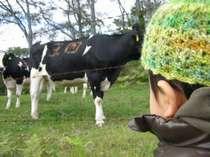 笹ヶ峰牧場 4km散策コース 乳牛たちに出迎えられた秋