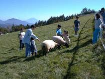 牧草地の中でひつじ、やぎとふれあえるまきば公園