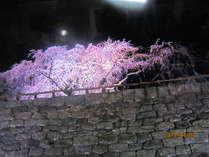 弘前城の石垣と桜です。