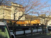 華乃湯 駐車場の桜の開花 3分咲き