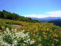宿から徒歩約10分でお花畑に。シーズンにはニッコウキスゲをはじめとした高山植物をお楽しみいただけます。