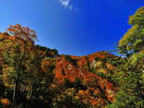 白山眺望と白山麓料理の宿 望岳苑