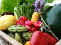 レストランでは新鮮な島野菜で元気をチャージ!