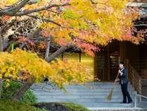 秋になると、エントランスの木々が色づきます