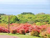 【つつじ公園】恵山の山麓に自生するツツジは一帯で約60万本と言われています