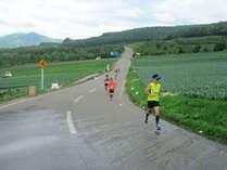 キャベツマラソン 夏頃、嬬恋村のキャベツ畑はいよいよ出荷のピークを迎えます