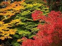志賀高原の紅葉(9月下旬~10月下旬)