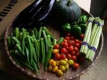自家農園で栽培している野菜達。