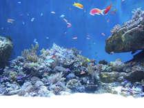 仙台うみの杜水族館:オセアニアの海