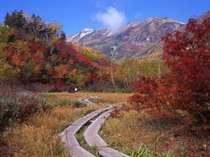 紅葉の絵画のような「中部山岳国立公園 栂池自然園」