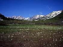 初春の栂池自然園「中部山岳国立公園」