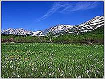 初春の白馬アルペンリゾート栂池高原「栂池自然園」