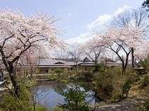 数寄屋造りの本館は移動に優しい平屋建ての造り(写真:庭園に咲き誇る桜と本館)