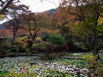 紅葉の見頃を迎えた庭園から真弓山を望む。