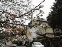 春には桜を愛でることができます