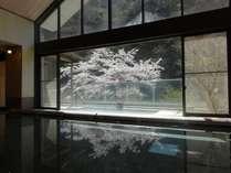 大浴場からの桜