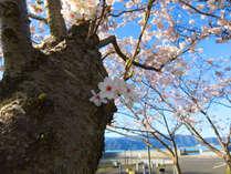 海を臨む桜…☆小浜公園まで徒歩10分少々