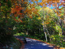 紅葉の平湯峠ツーリング。色鮮やかな森の中のツーリングは、最高の贅沢です。