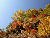 暑かった年は赤が少ないですが、それでも黄色やオレンジと、奥飛騨温泉郷の紅葉は本当に綺麗です。