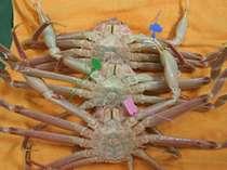 各漁港で獲れた証明のタグ付蟹☆お好きな漁港をお選びください♪