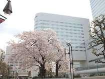 春には、客室から隣接の鐘塚公園に咲く満開の桜を望めます。(2012年4月撮影)