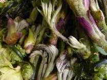 一里野の山々でとれた新鮮な山菜