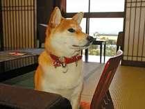 愛犬と一緒に泊まれるペット専用客室●ワンちゃんの足洗い場付ペット専用の客室♪