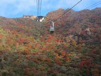 仁田峠ロープウェイが運行していますので、高い場所からの眺めも絶景です♪