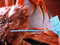 『松風庵・タグ付特番蟹懐石』プランでは、地元の方でもめったに食せない地物ブランド蟹をどうぞ!
