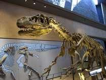 恐竜に会いに行こう!いのちのたび博物館(車で5分)
