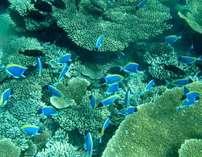 グラスボートからエメラルドグリーンの海や珊瑚礁、たくさんのお魚に会えるかも♪