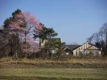 満開の山桜、春のエールです